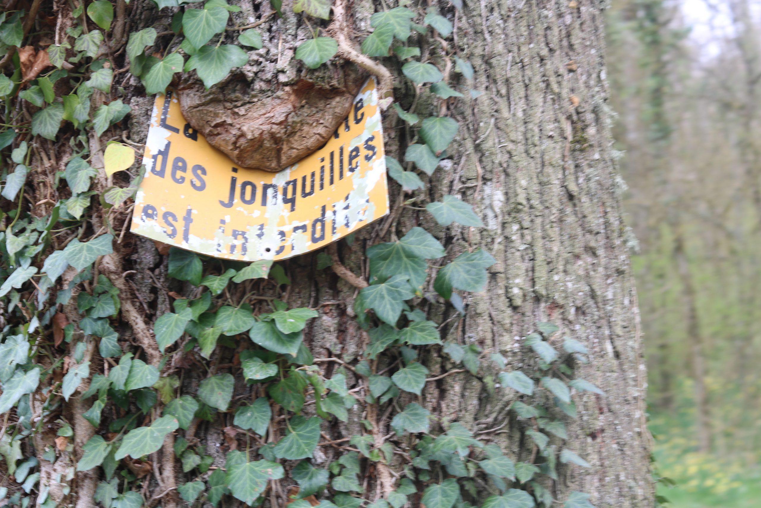 ballade jonquilles blog thereseandthekids famille vaud