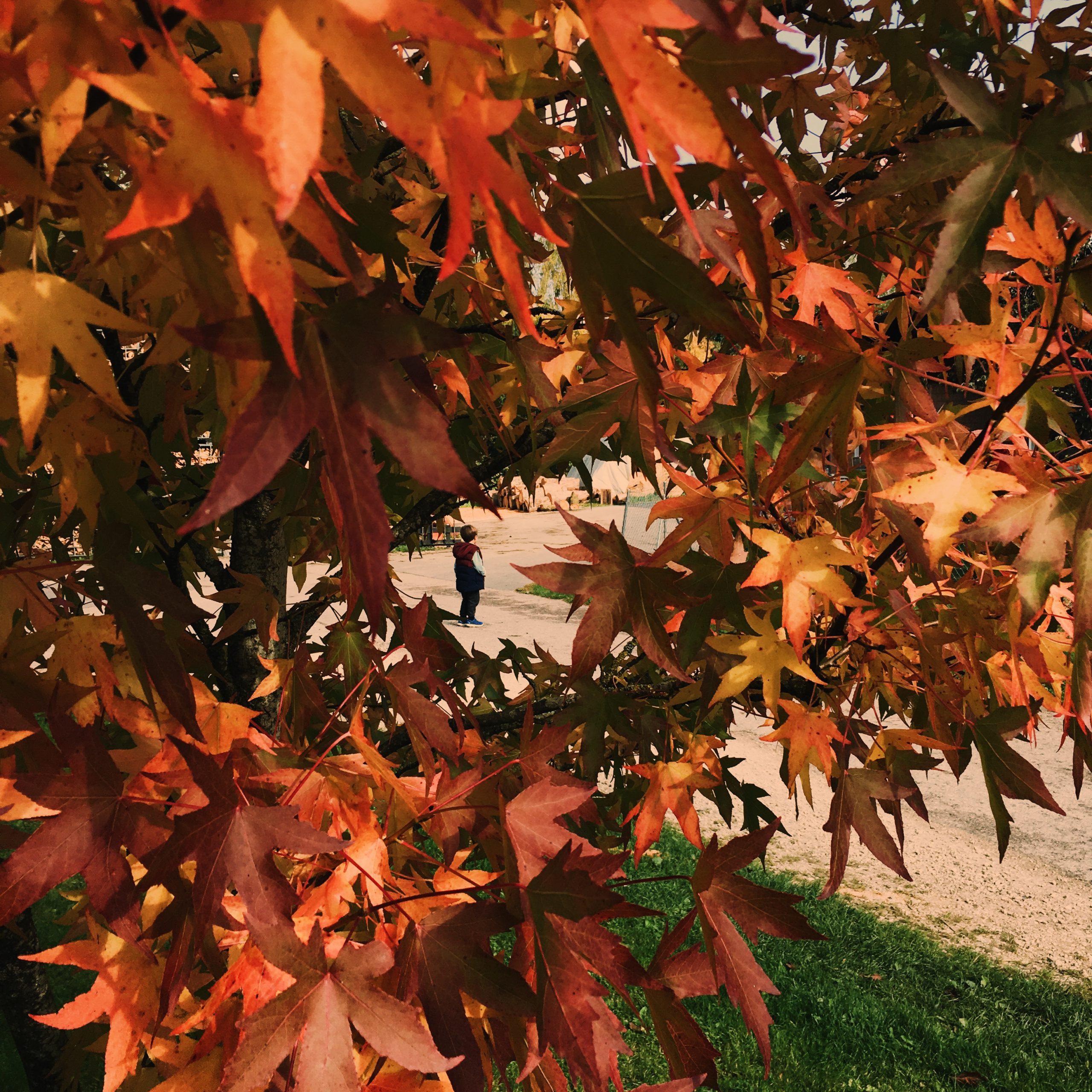 chasse au trésor automne blog thereseandthekids famille