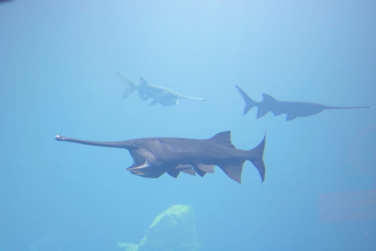 aquarium aquatis eau douce suisse blog thereseandthekids sortie famille